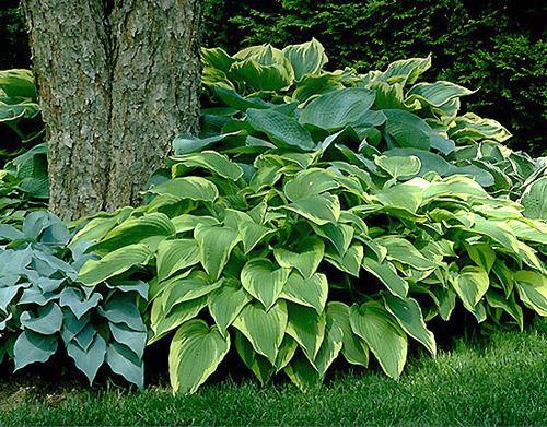 Low Maintenance Outdoor Plants
