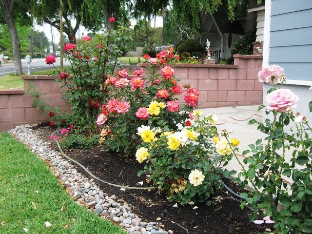 Front Yard Rose Garden Ideas