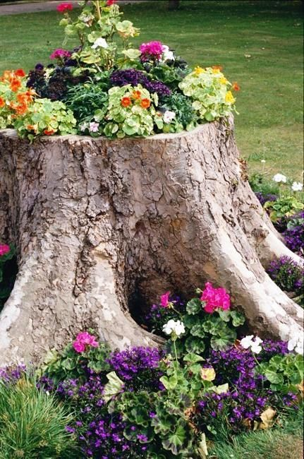 Tree Stump Garden Ideas