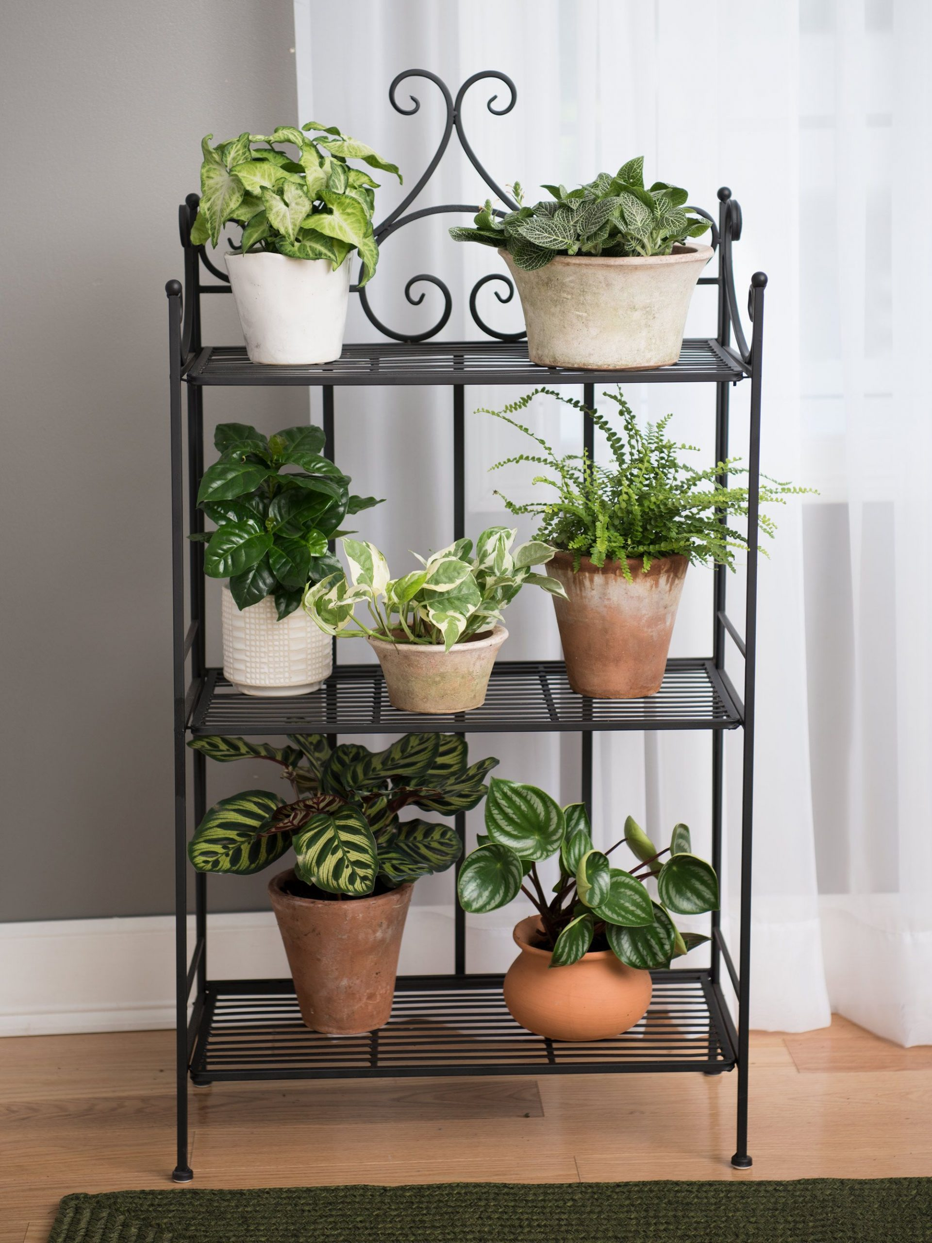 Wrought Iron Plant Stands Outdoor